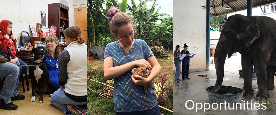 photo collage, vet and student with dog and child, student holding chicken, two students with elephant
