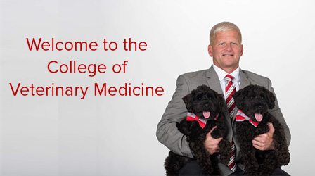 photo of dean rustin moore holding two dogs with words welcome to the college of veterinary medicine