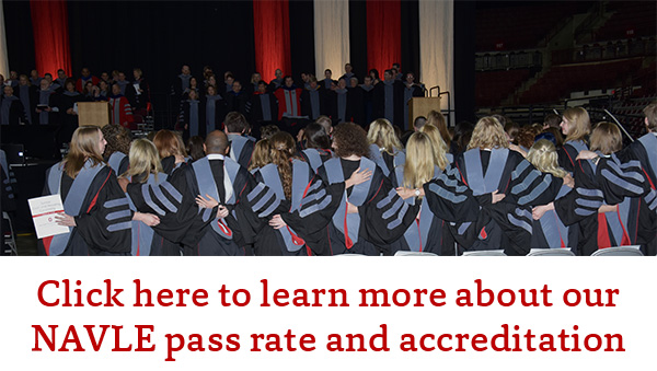 Button with words Click here to learn more about our NAVLE pass rate and accreditation