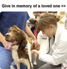 Give in memory of a loved one