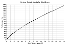 Resting Calorie Needs for Adult Dogs